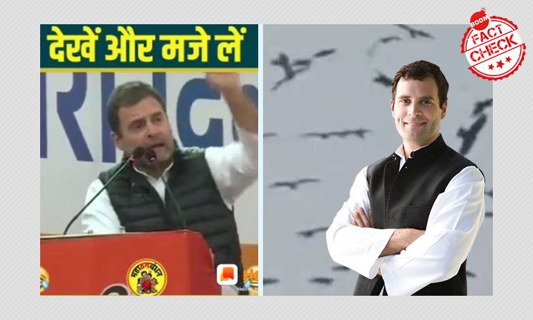 क्या राहुल गाँधी ने चीलों के बीच बेरोज़गारी कि बात की? नहीं, वीडियो फ़र्ज़ी है